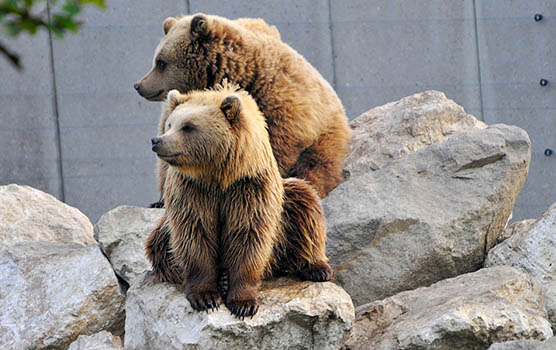 Медведица с медвежатами - красивые фото и картинки ...