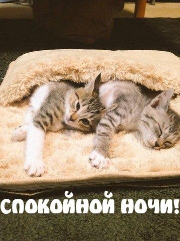 Скачать бесплатно пожелания спокойной ночи - красивые и ...