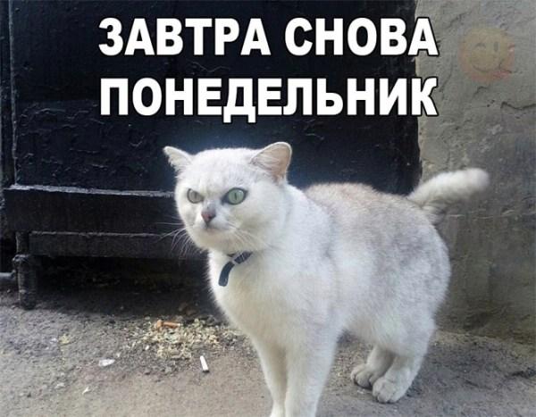 Смешные коты и кошки самые прикольные и веселые картинки