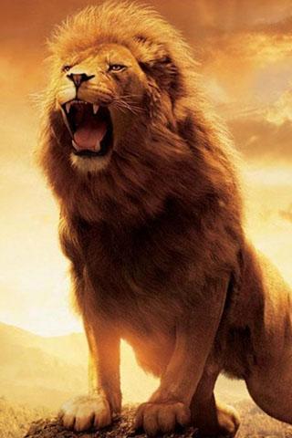 Скачать картинку лев на телефон на главный экран - лучшая ...