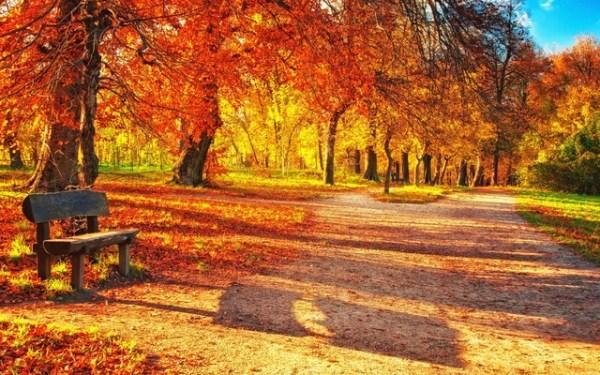 Красивые и удивительные картинки осень в парке - подборка фото