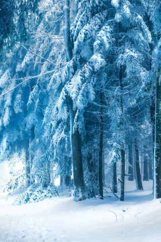 Скачать картинки про зиму на заставку телефона - самые ...
