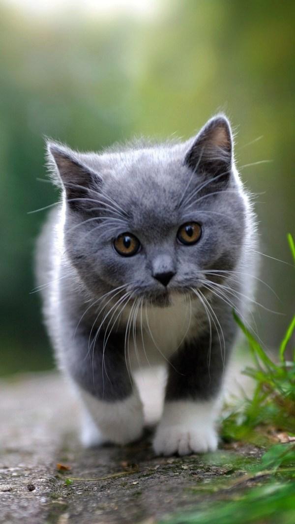 Красивые картинки на телефона на заставку кошки и котики ...