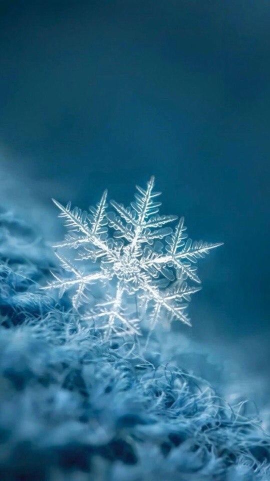 Скачать красивые новогодние и рождественские картинки на ...