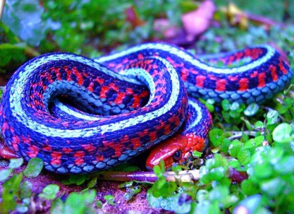Картинки самые красивые змеи - подборка 15 фото
