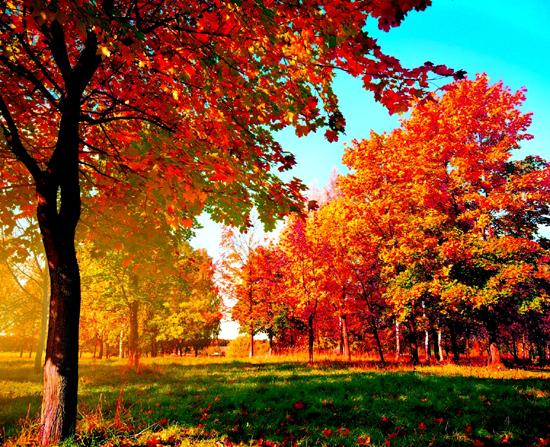 Что в сентябре происходит в живой природе, изменения осенью?