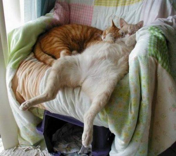 Очень смешные картинки спящих - 30 фото