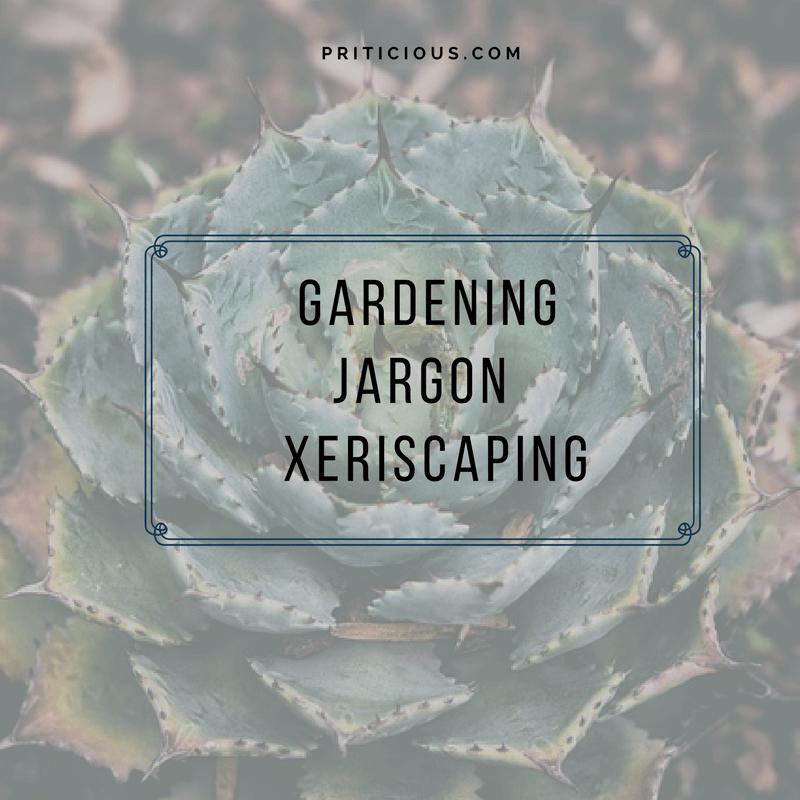 Gardening Jargon - Xeriscaping