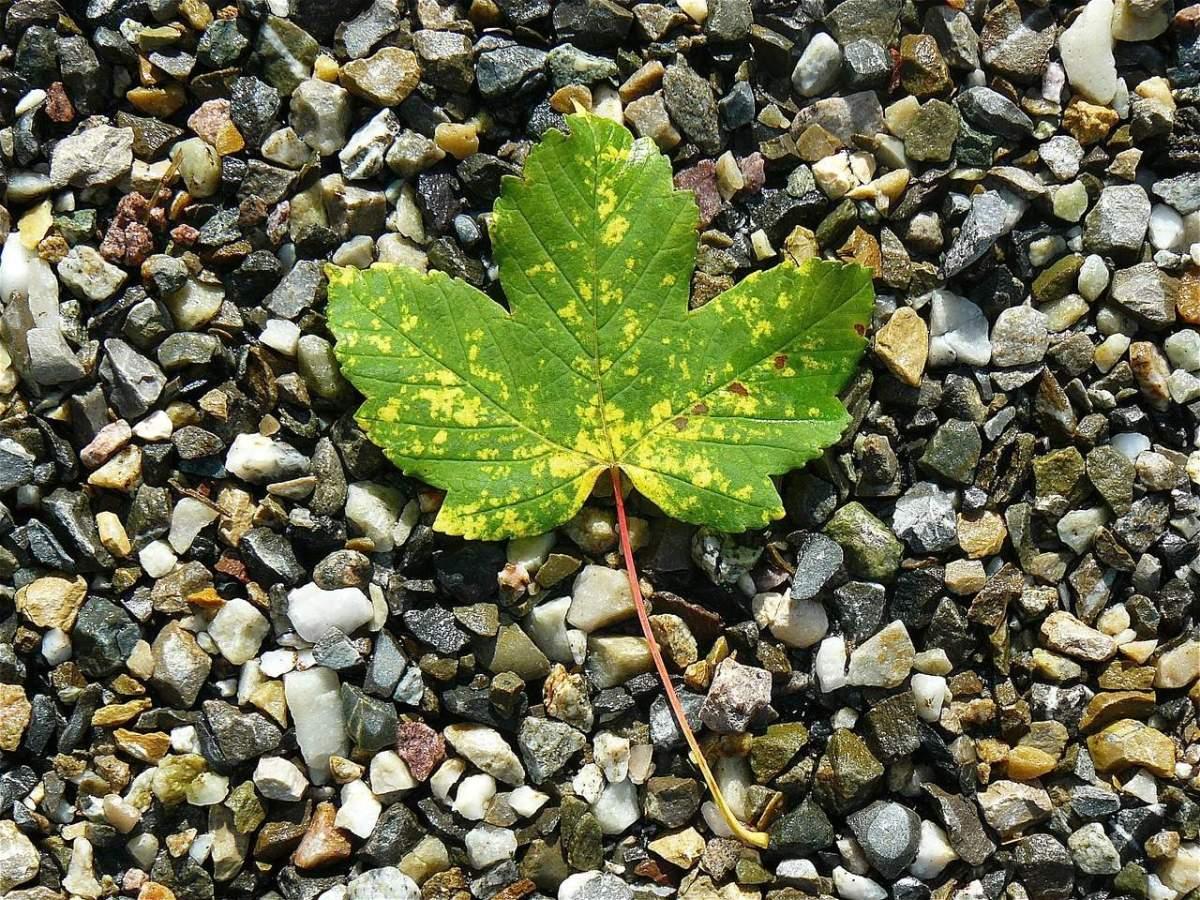 Gardening Jargon - Leaf mold