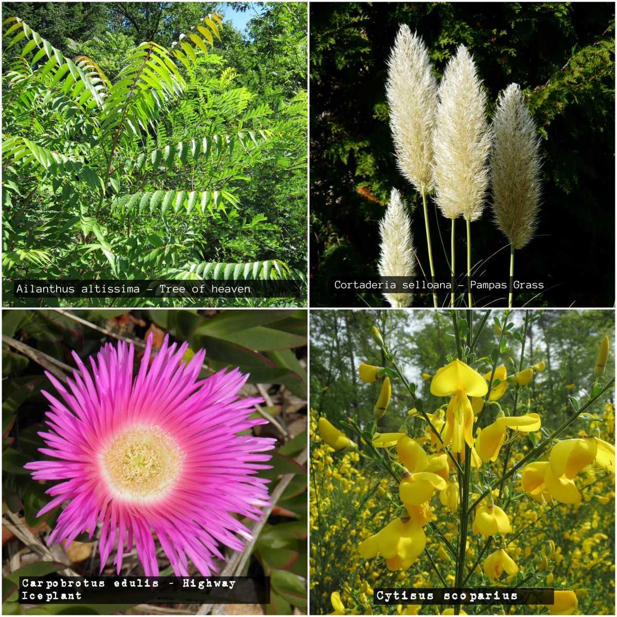 Gardening Jargon - invasive