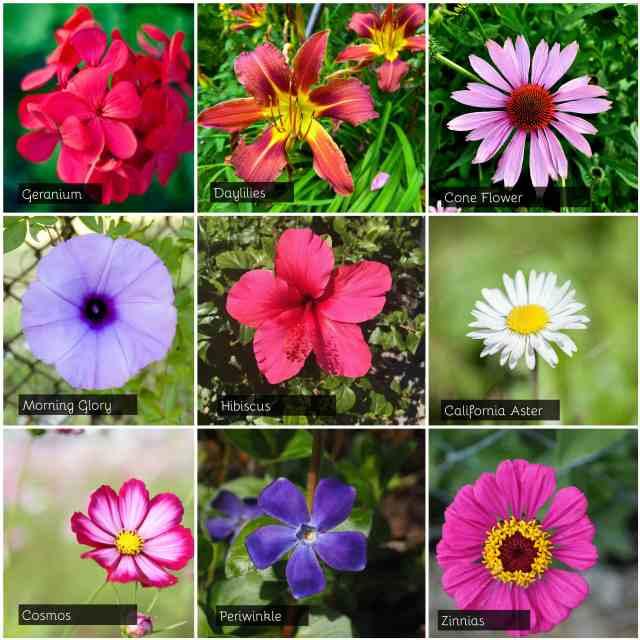 summer flowering plant