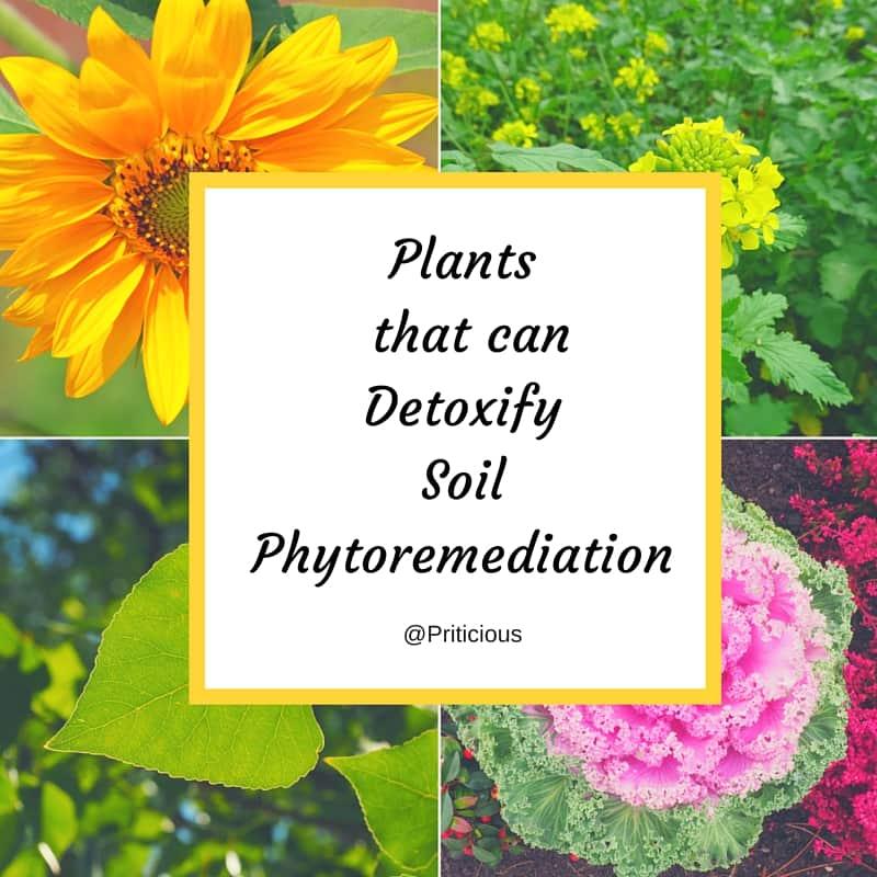 Gardening Jargon - Phytoremediation