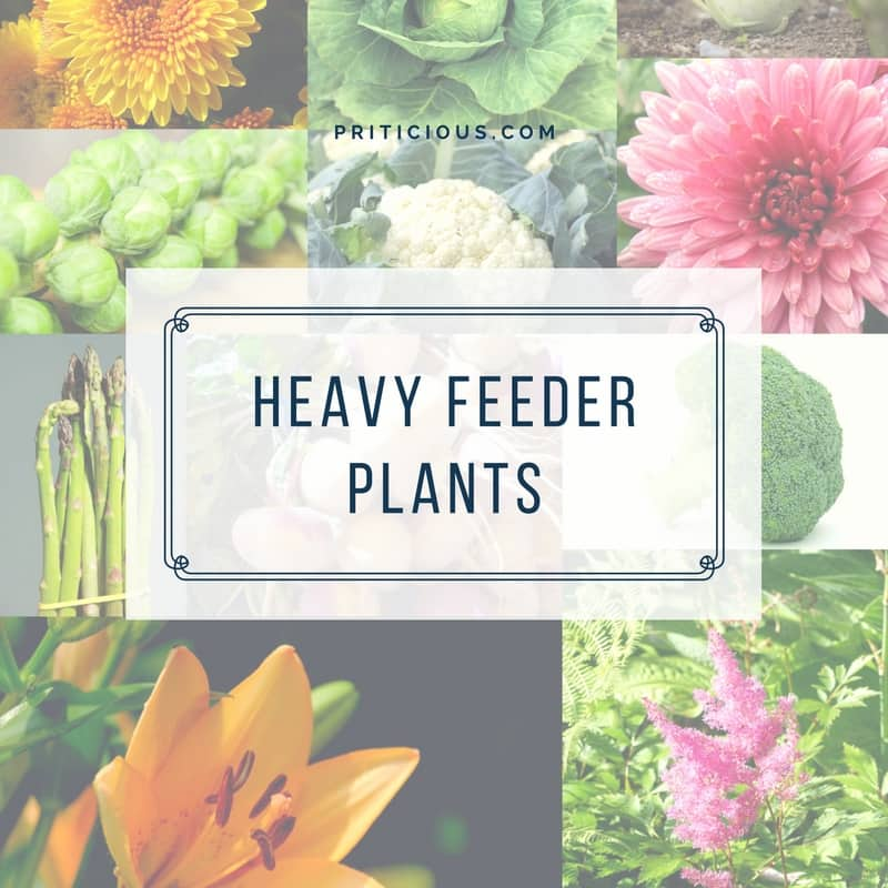 Gardening Jargon - Heavy Feeders