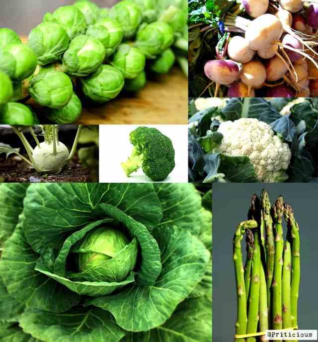 Heavy Feeder Vegetable Plants