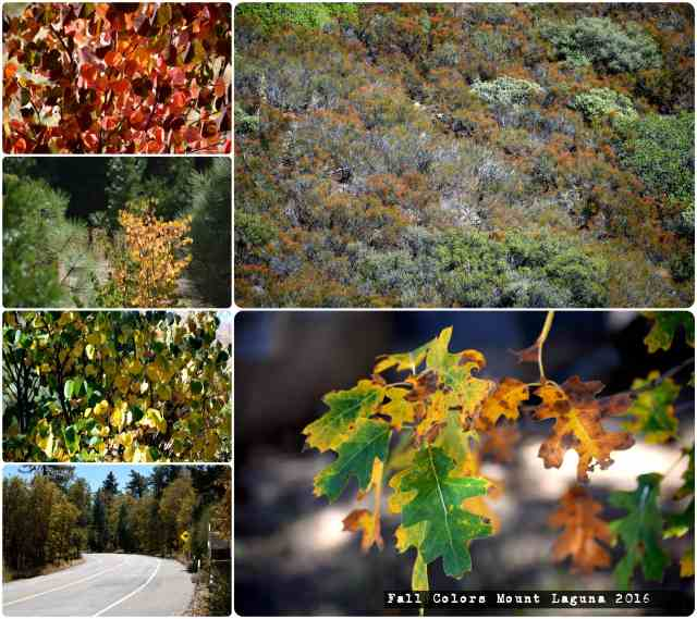 Mount Laguna Fall Colors