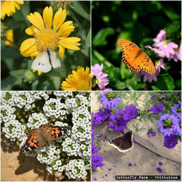 butterfly farm sandiego