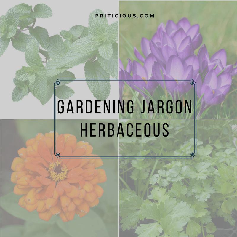 Gardening Jargon - Herbaceous