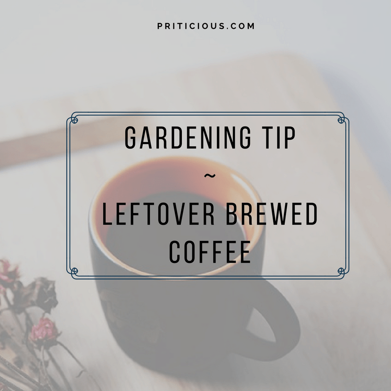 Gardening Tip - Leftover Brewed Coffee