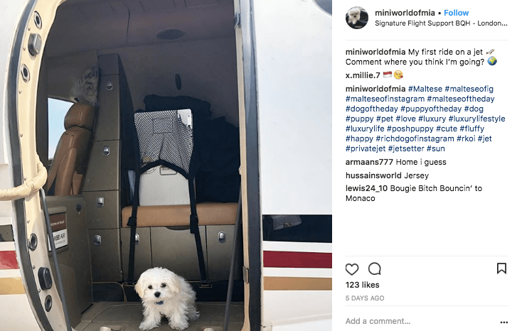 Maltese dog on her way from London to Monaco