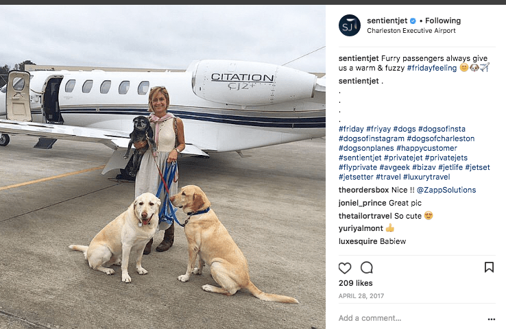 Dogs on Sentient Jet
