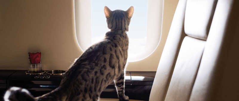 VistaJet pet program