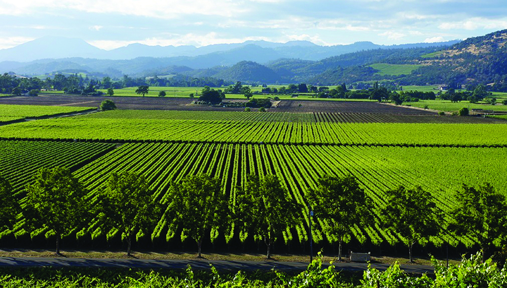 Napa Valley Luxury Hotels And Resorts