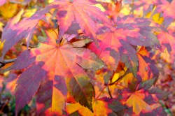 tie-dye leaves