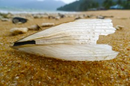 worn out seashell