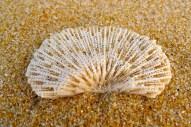 a fan of coral