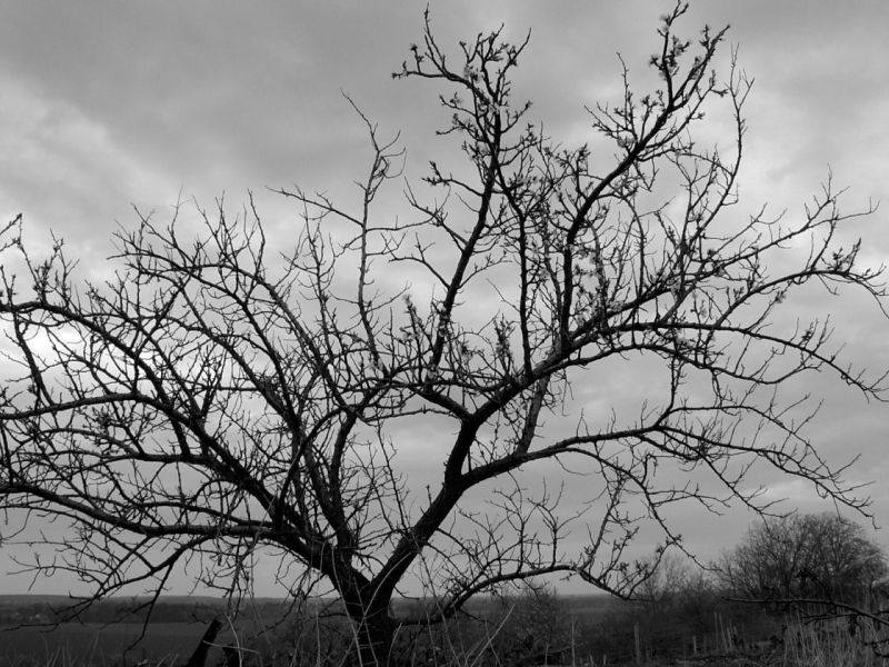 Baum ohne Blätter vor düsterem Himmel