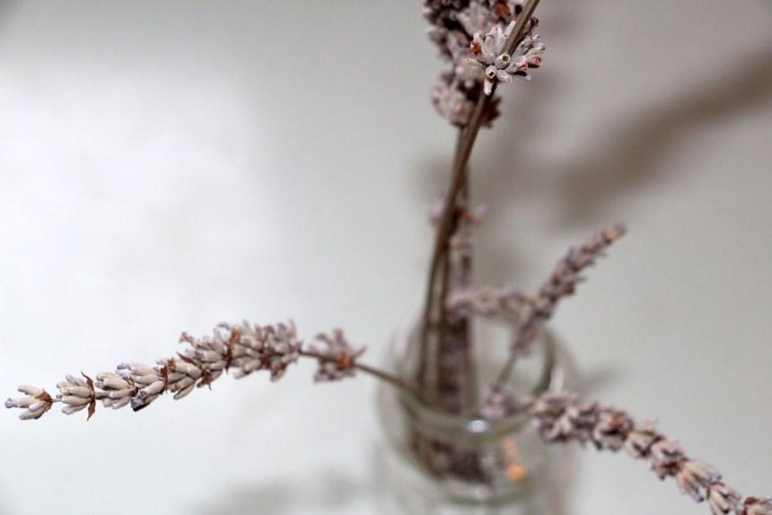 20200114 Lavendel_kl