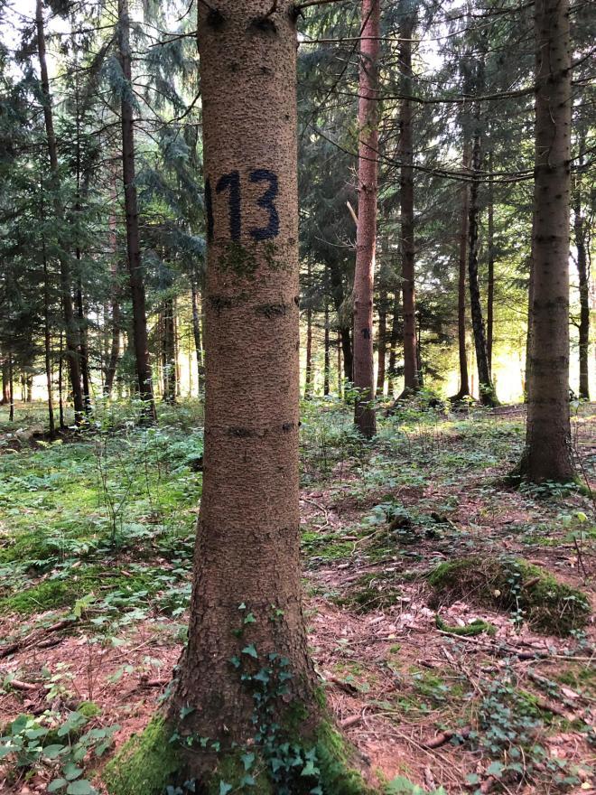 Waldfriedhof3_2019