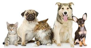 pets,pet,Reasons Why You Should Own a Pet,blood pressure,animals,animal,ghananews,levels,cats,cat,dogs,dog