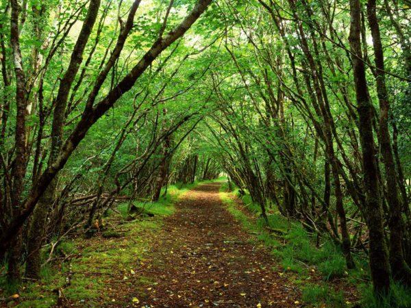 Samostalni Sindikat šumarstva Pozdravio Inicijativu Za Donošenje Zakona O šumama