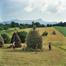 The Borca family from the village of Breb, Romania, put finishing touches to one of the 40 haystacks they make each summer in nearby Maramures,...
