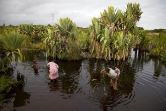 Women bathe and brush their teeth in a local swamp near the village of Ambandrika. Accepting the constant health risks, they trust and use nature's...