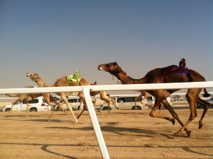 The camels' owners can control the speeds of the whips to make the animals run faster