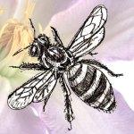 Как нарисовать Пчелу поэтапно