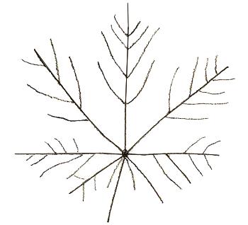 Добавляем маленькие прожилки лист