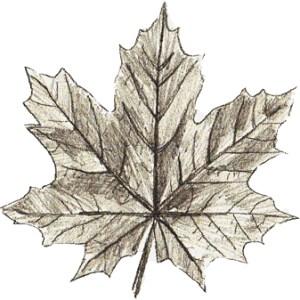 Делаем листочек разноцветным