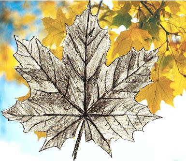 Рисуем кленовй лист
