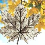 Рисуем кленовый лист  поэтапно