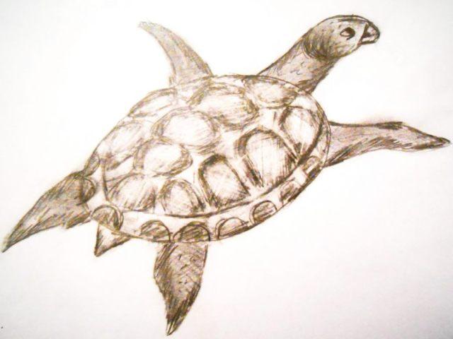 Как нарисовать черепаху поэтапно