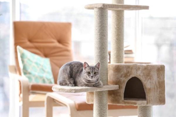 Spelcomplex voor kitten