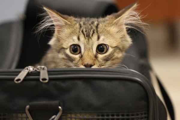 Takut Membawa Kucing