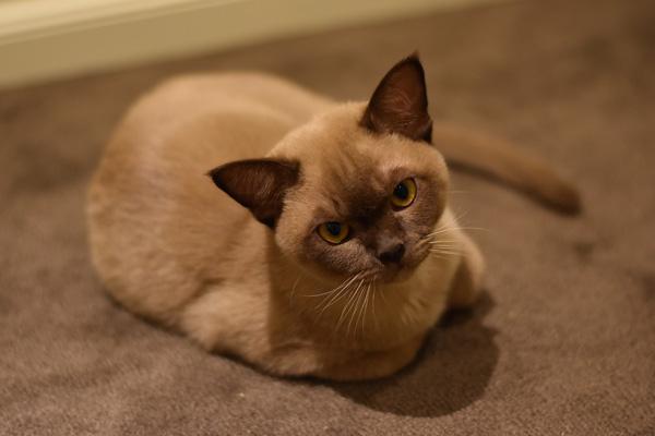 Kucing yang tidak puas