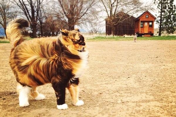 Angin bertiup pada kucing