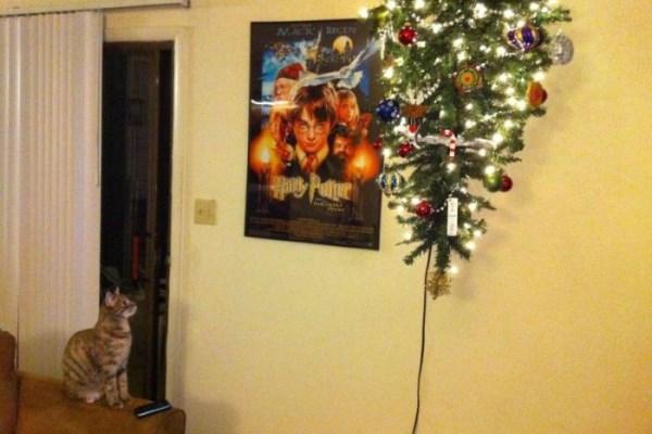 Solusi yang baik di rumah dengan kucing adalah dengan menggantung pohon dari langit-langit.