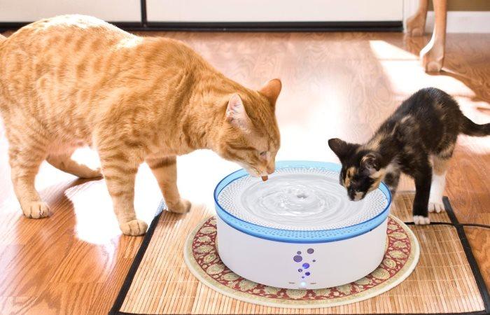Air mancur minum untuk kucing