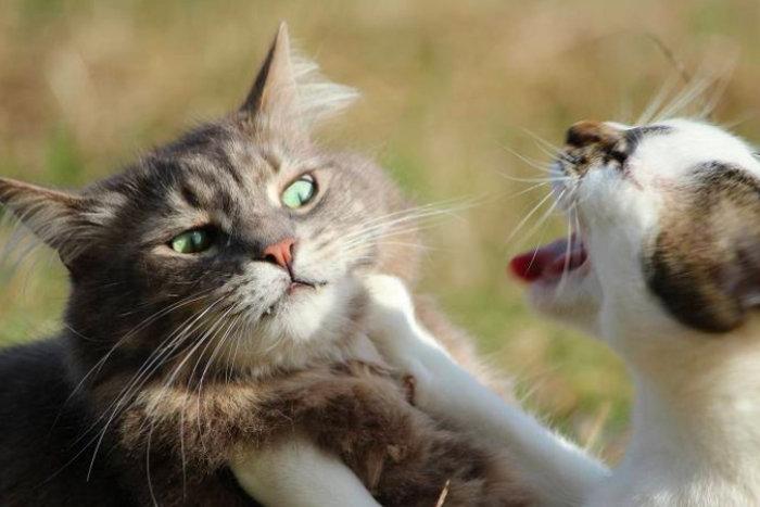 Kucing tidak mengizinkan kucing untuk datang kepadanya